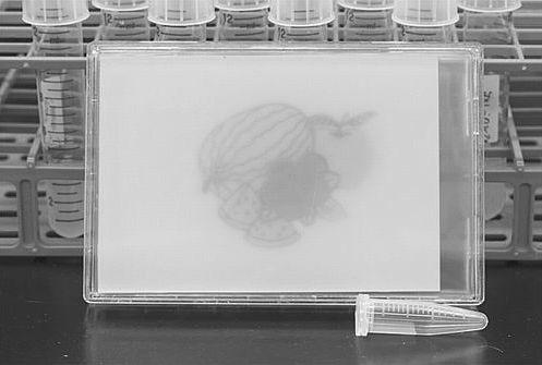 科学家成功用细菌作画有望通过开合基因生成复杂分子