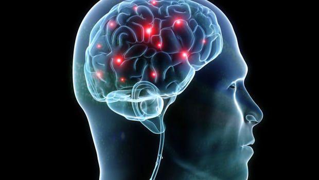 研究显示男性大脑更大但女性大脑效率更高