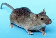 PNAS:低氧可逆转小鼠神经退行性疾病