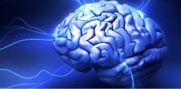 垃圾食品外包装或会拦截大脑成瘾回路影响我们对食品的选择