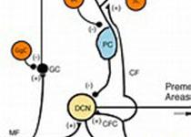 感冒时不适合学习,这也需要研究?还发在Nature子刊上?