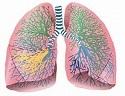 系统性红斑狼疮的肺部表现