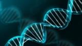 Org Biomol Chem:对嘧啶核苷进行修饰产生具有抵抗HIV潜力的化合物