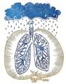 慢阻肺:病变在肺结构,改变在微环境