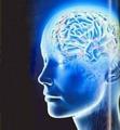 酰胺质子转移成像在成人脑疾病中的研究进展