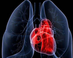 高血糖是心血管疾病的高危因素?NO,幕后黑手原来是它!