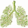 系统性硬化症相关性间质性肺疾病的诊断评估与治疗进展