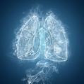 肺部HRCT基本征象丨低密度型