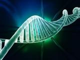 路谨教授:慢性淋巴细胞白血病分层治疗