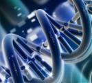 [ESC2017]自然随机试验:降脂获益不在LDL-C,而在LDL颗粒