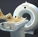 小肽转运载体在分子靶向显像研究中的应用