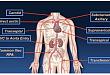 经导管主动脉瓣置换术现状和进展