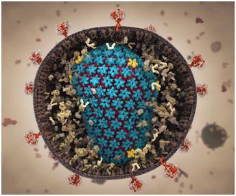 NatCommun:利用分子动力学模拟揭示HIV衣壳与它的环境之间的相互作用