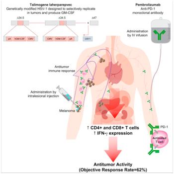 Cell:重大突破!溶瘤病毒疗法有效改善癌症免疫疗法的疗效,总体反应率高达62%