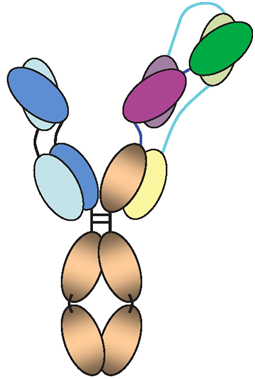 Science:重磅!一种三特异性抗体三管齐下有望阻止HIV感染