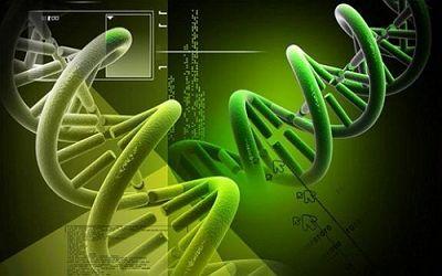 NK细胞抗肿瘤研究进展