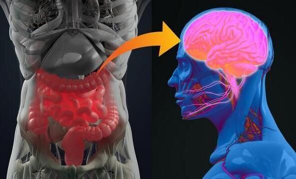 深度解读肠道菌群如何通过脑肠轴影响机体大脑健康!