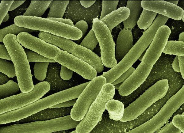Science:神奇!吃季节性的食物,肠道微生物也会季节性变化!