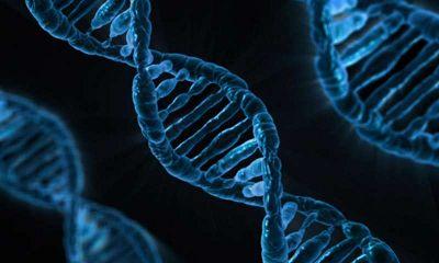 PNAS:组织相容性复合体通过调节肠道微生物稳态保护机体不受I型糖尿病与其它自体免疫性疾病的影响