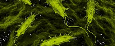人体内寄生的病原微生物竟然能够保护身体健康?!