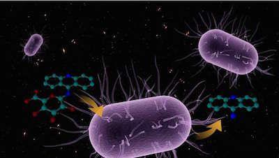 Hepatology:药物伤肝?可能跟肠道菌群有关系