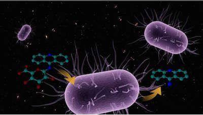 肠道微生物与人体健康相关研究进展一览