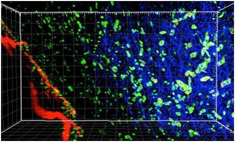 2017年6月Cell期刊不得不看的亮点研究