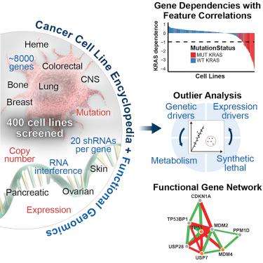 Cell:大规模RNAi筛选鉴定出对癌症重要的基因