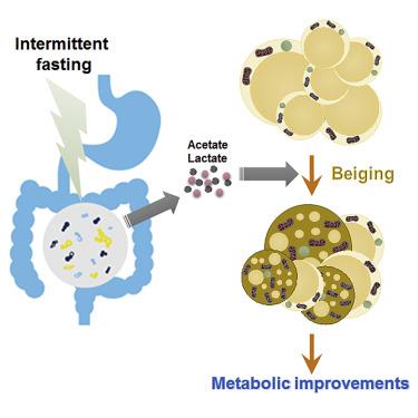 CellMetab:隔日断食促进脂肪棕色化肠道菌群改变是关键原因