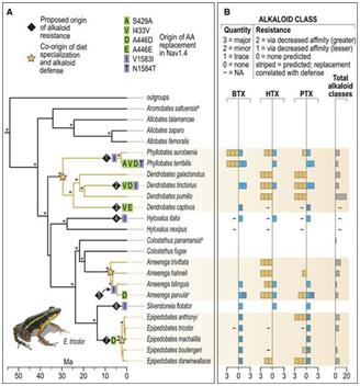 Science:毒蛙如何对自己的神经毒素产生抵抗力?