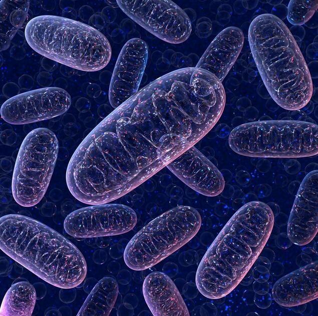 深度解读线粒体对机体健康的重要性及线粒体疾病的发生机制!